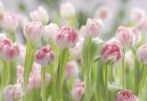 Flowers and Textures (Imagine 2) poszter - Secret Garden